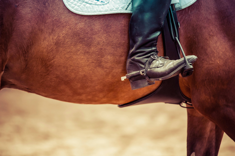 mentaal motivatie vooruitgang boeken doelen dressuur paardrijden advies tips