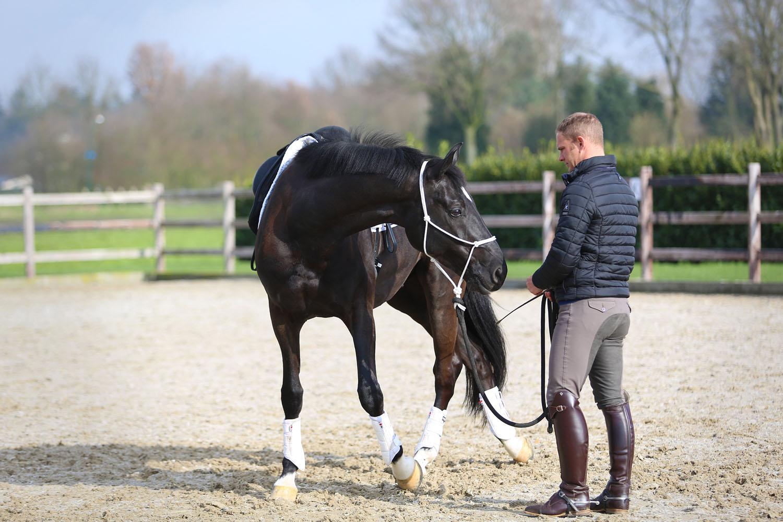 angst stress paarden gedrag tips advies dressuur paardrijden