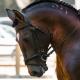 dressuur neusriem hoofdstel strak te strak paardrijden wedstrijden tips advies