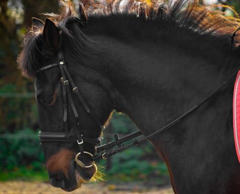 kreupel teugelkreupel verkeerd bit bitten bitfitting dressuur paardrijden tips advies