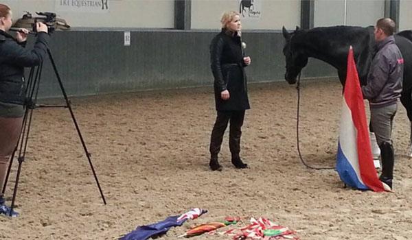 werken in de paarden tristan tucker