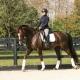 trainingsschema opstellen dressuur paard