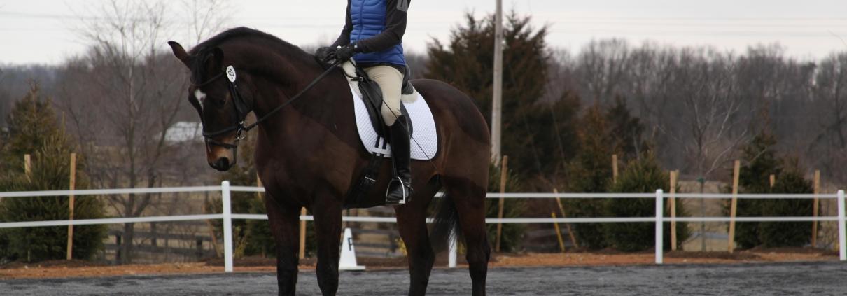 backingup achterwaarts dressuur paardrijden tips