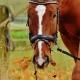 voerbeleid lege maag trainen maagzweren tips advies dierenarts