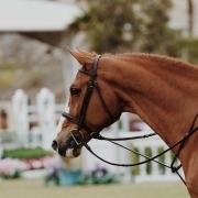 verzameling aanleuning dressuur paardrijden tips