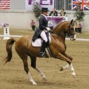 snelheid dressuur galop draf tips rijtechnisch paardrijden advies