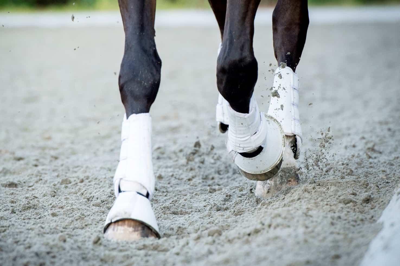 draf verzameling dressuur paardrijden tips