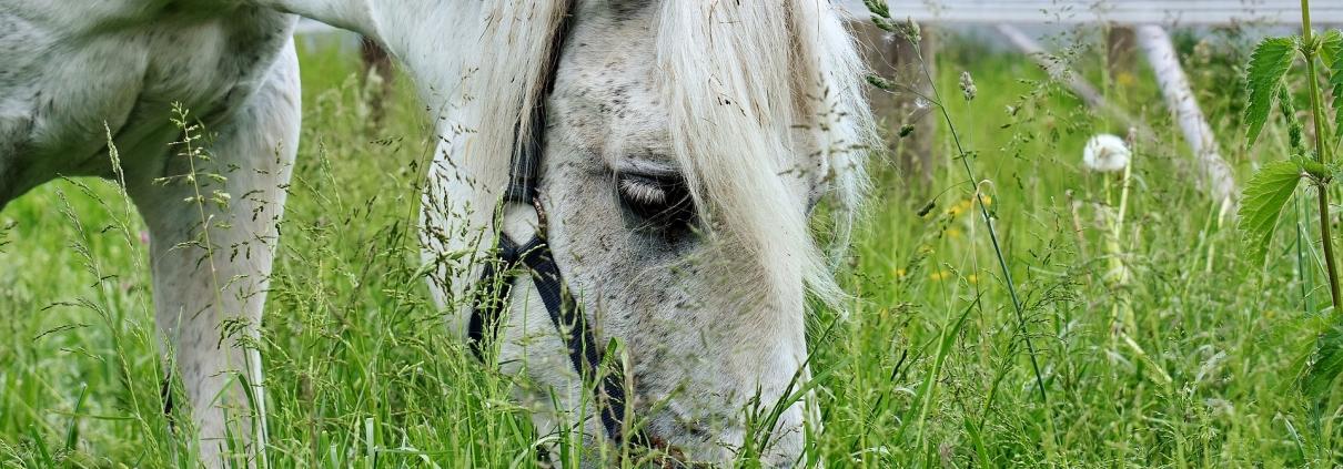Equine Metabolic Syndrome EMS overgewicht paard medisch dierenarts advies tips