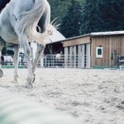 kreupel kreupelheidsonderzoek medisch advies tips dierenarts