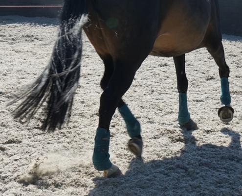 De voordelen en nadelen van het longeren van een jong paard