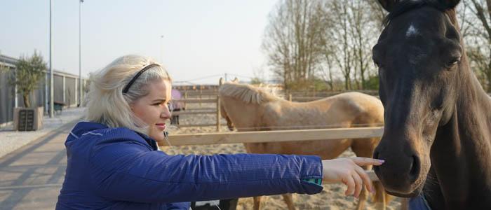 hippisch ondernemen werken in de paarden coronavirus