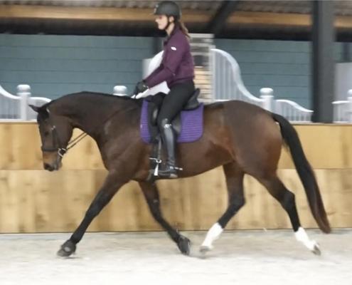 losrijden dressuur training paard
